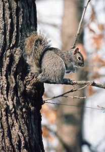5grsquirrel